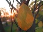 goodness of leaf 2