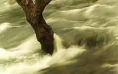 river rushing by tree